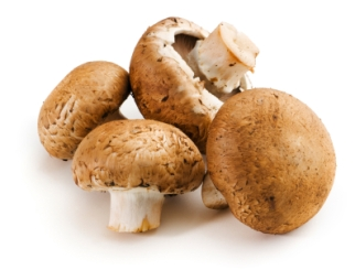 Main Ingredients – Mushrooms